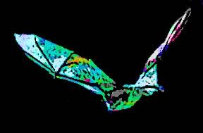 gray bat 2