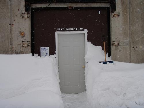 bat bunker wns