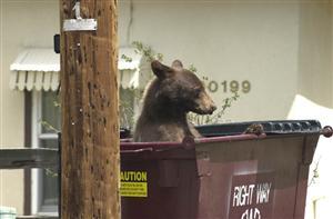 dumpster bear