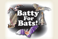 102610_batty_for_bats
