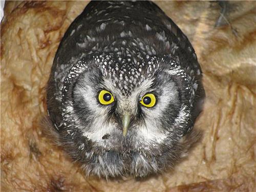 owl toilet